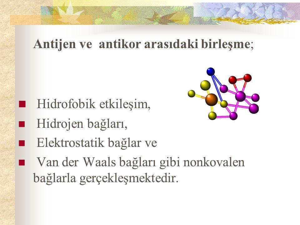 Antijen ve antikor arasıdaki birleşme;