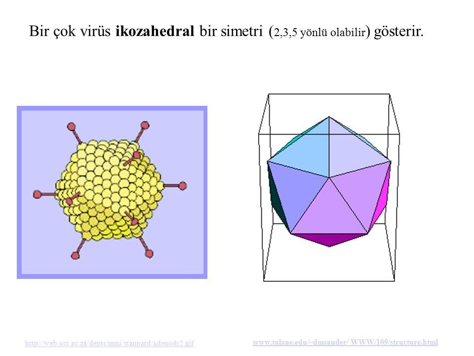 Bir çok virüs ikozahedral bir simetri (2,3,5 yönlü olabilir) gösterir.