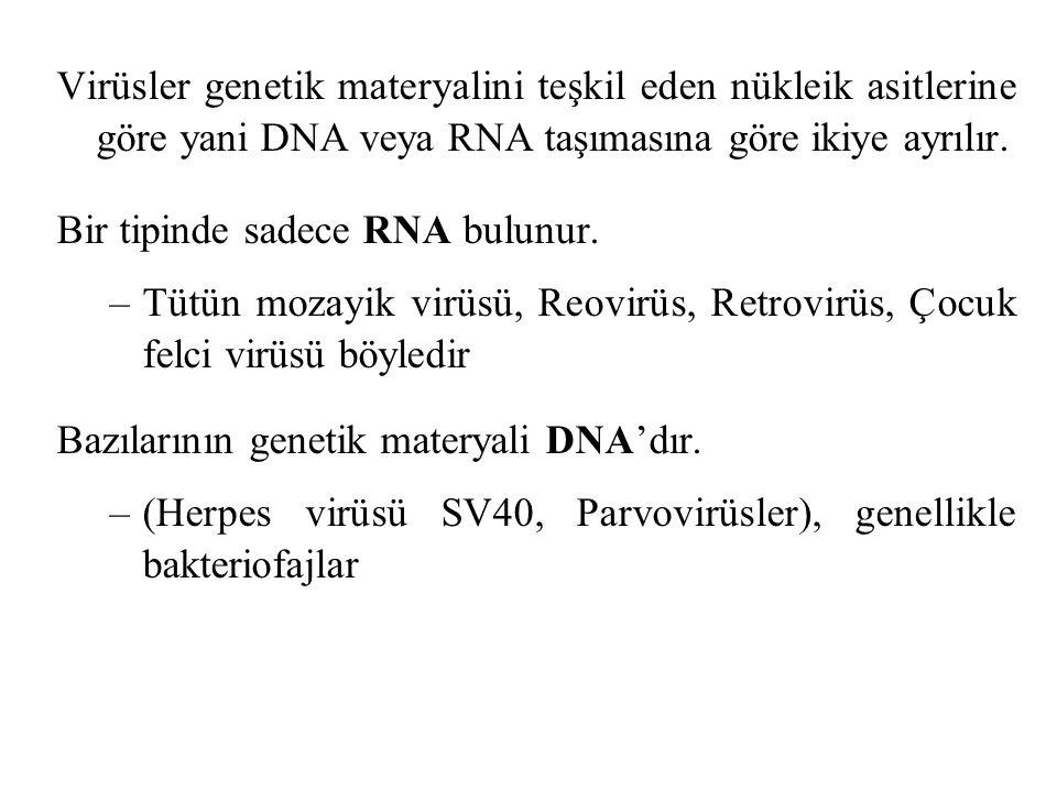 Virüsler genetik materyalini teşkil eden nükleik asitlerine göre yani DNA veya RNA taşımasına göre ikiye ayrılır.