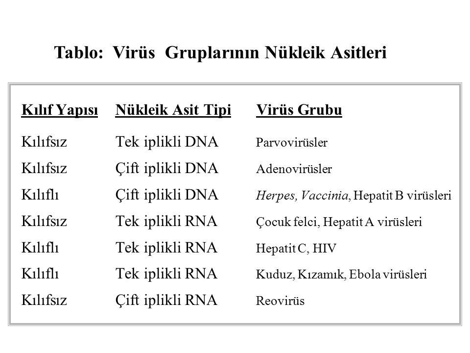 Tablo: Virüs Gruplarının Nükleik Asitleri