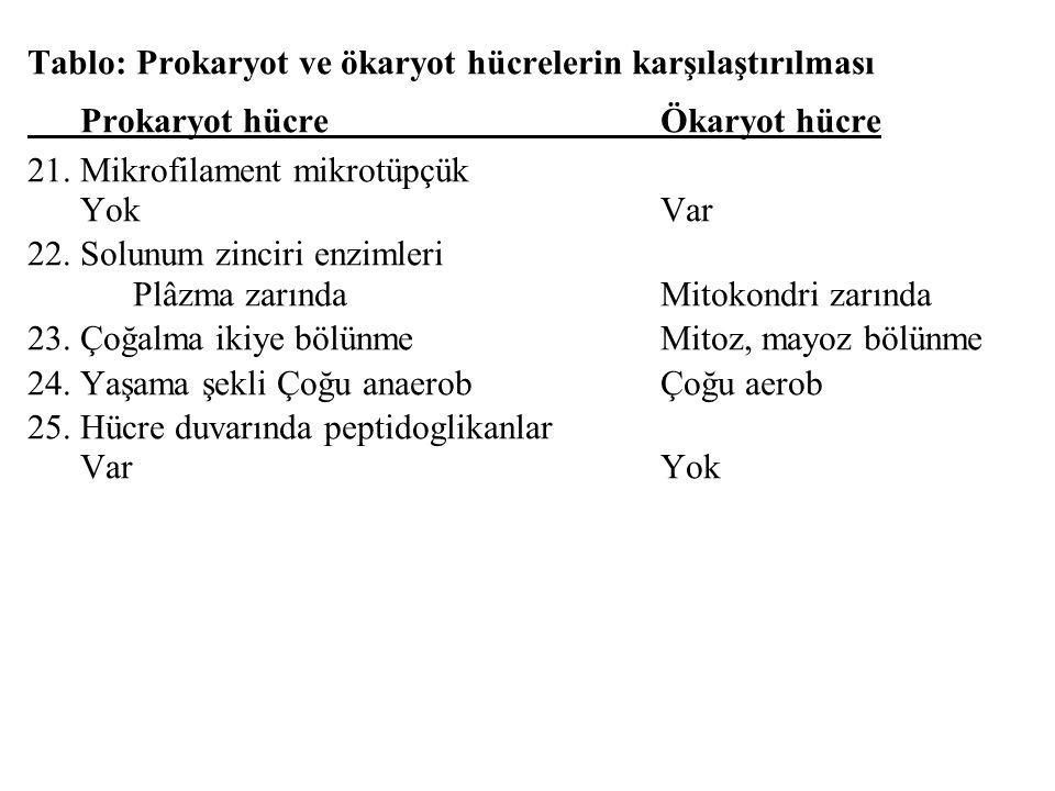 Tablo: Prokaryot ve ökaryot hücrelerin karşılaştırılması