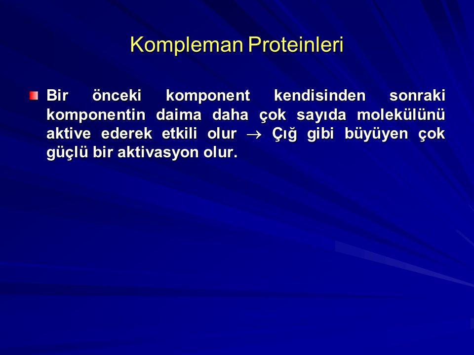 Kompleman Proteinleri