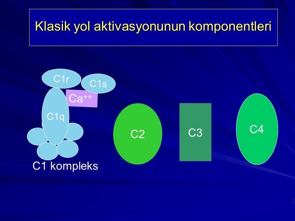 Klasik yol aktivasyonunun komponentleri