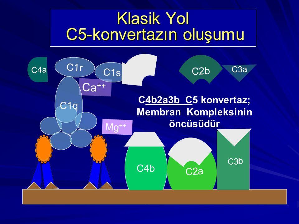 Klasik Yol C5-konvertazın oluşumu
