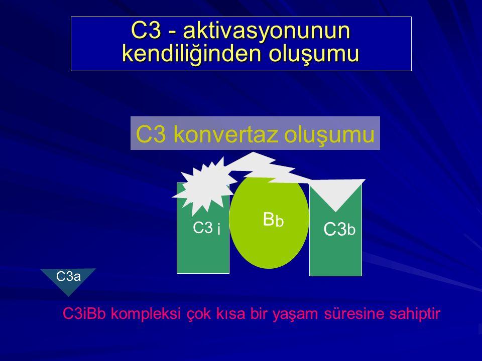 C3 - aktivasyonunun kendiliğinden oluşumu