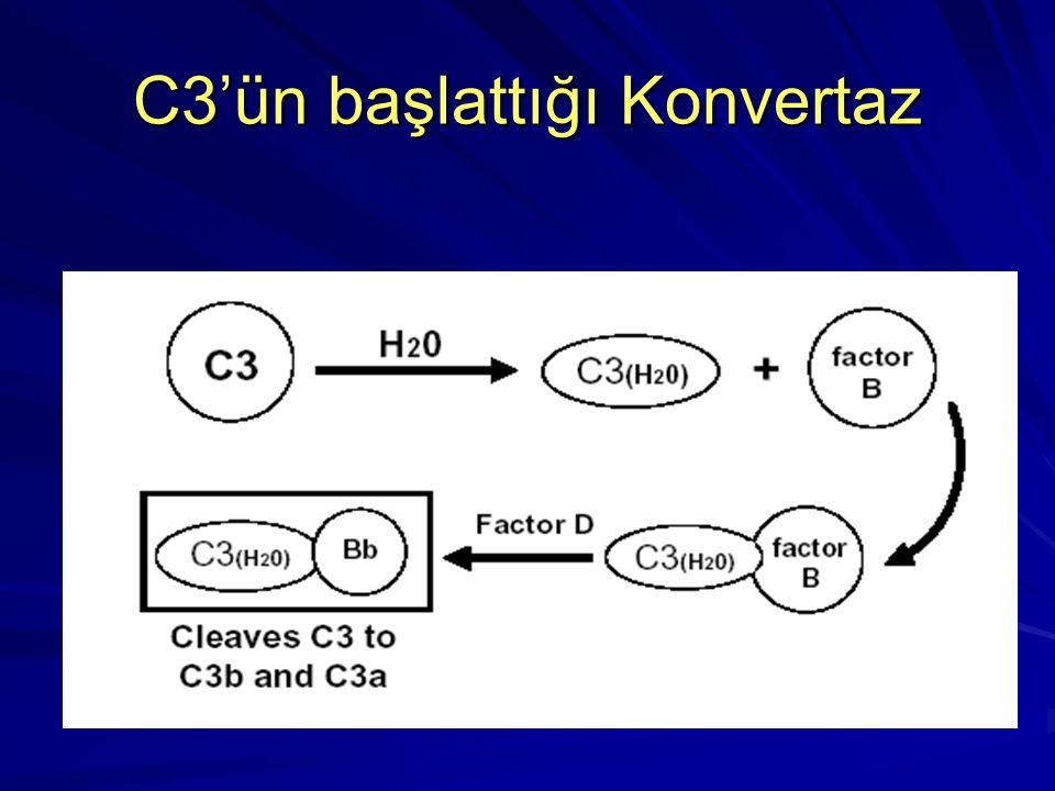 C3'ün başlattığı Konvertaz