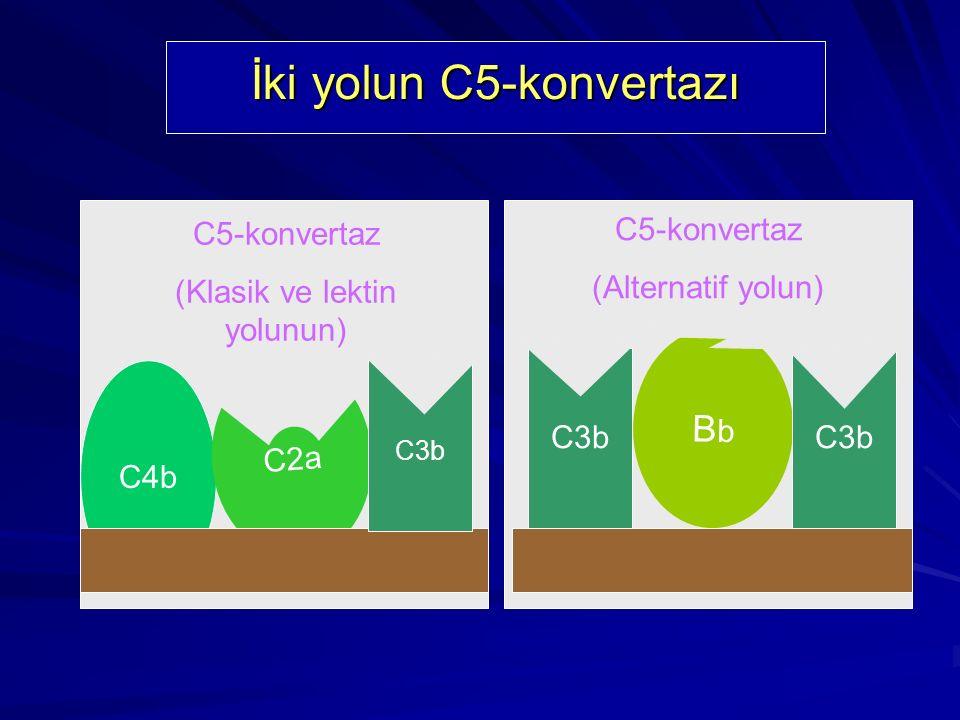 İki yolun C5-konvertazı
