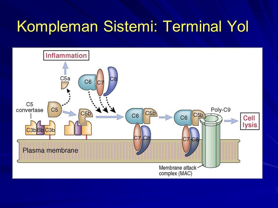 Kompleman Sistemi: Terminal Yol