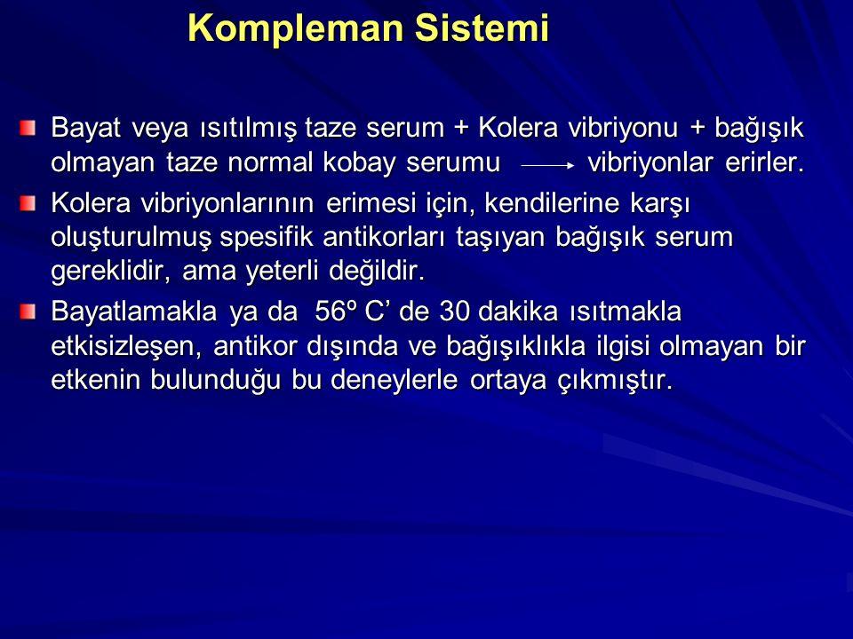 Kompleman Sistemi Bayat veya ısıtılmış taze serum + Kolera vibriyonu + bağışık olmayan taze normal kobay serumu vibriyonlar erirler.