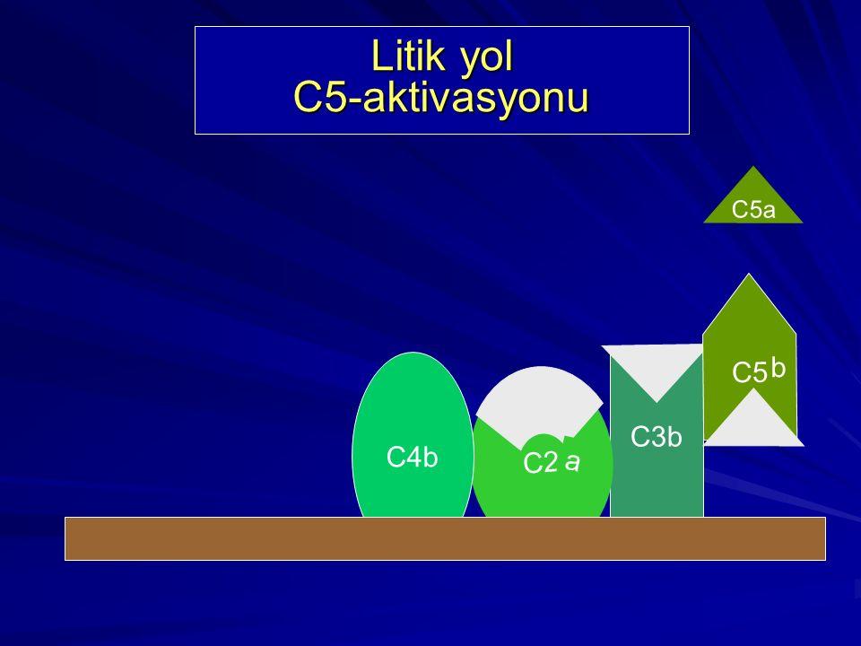 Litik yol C5-aktivasyonu
