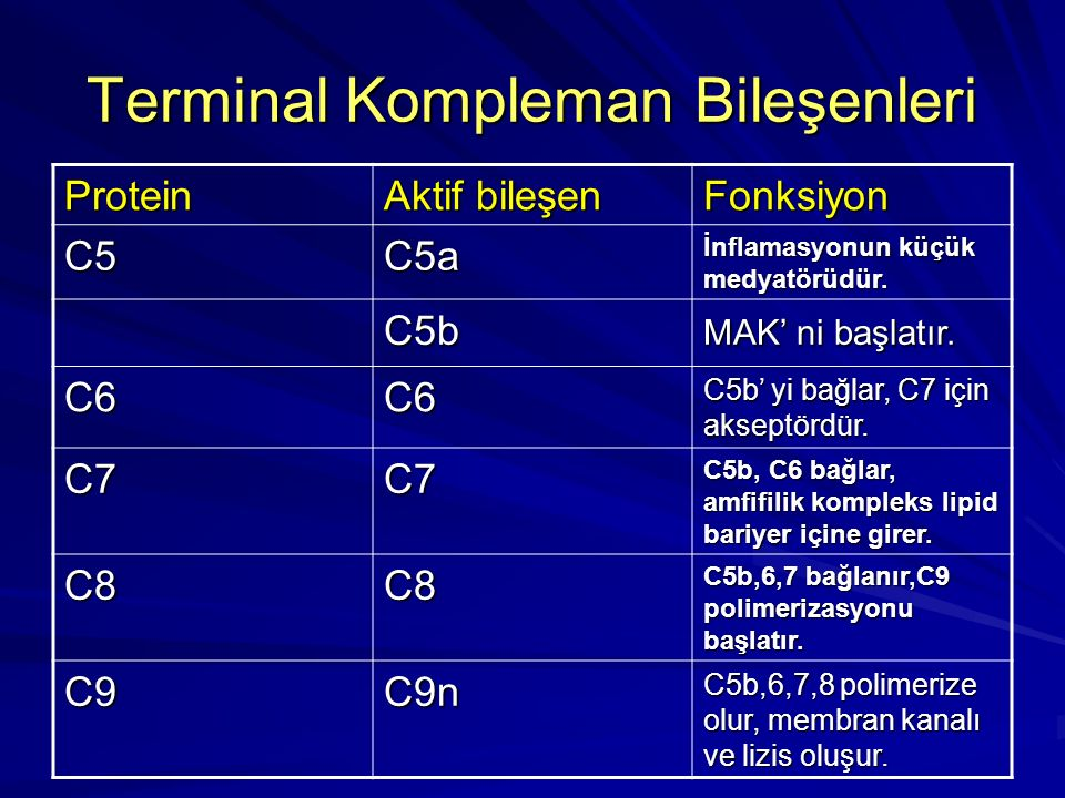 Terminal Kompleman Bileşenleri
