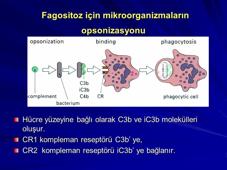 Fagositoz için mikroorganizmaların opsonizasyonu