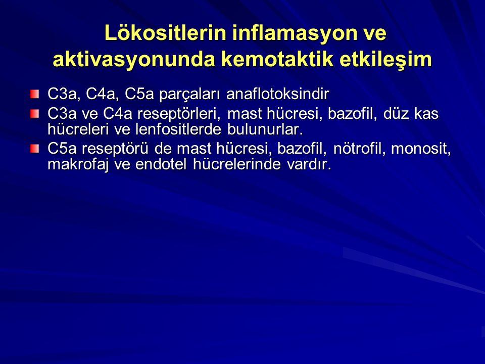 Lökositlerin inflamasyon ve aktivasyonunda kemotaktik etkileşim