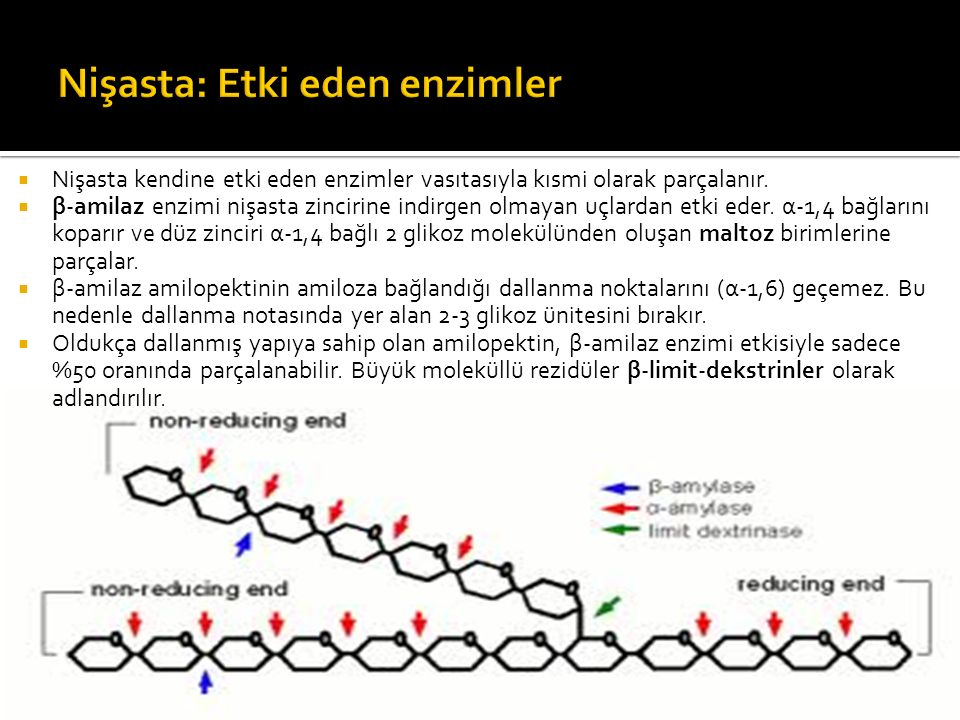Nişasta: Etki eden enzimler