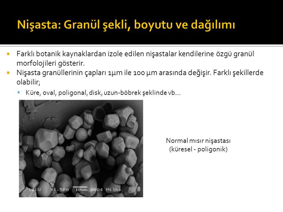 Nişasta: Granül şekli, boyutu ve dağılımı
