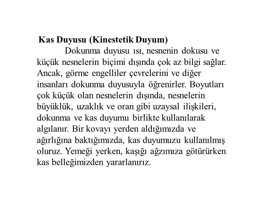 Kas Duyusu (Kinestetik Duyum)