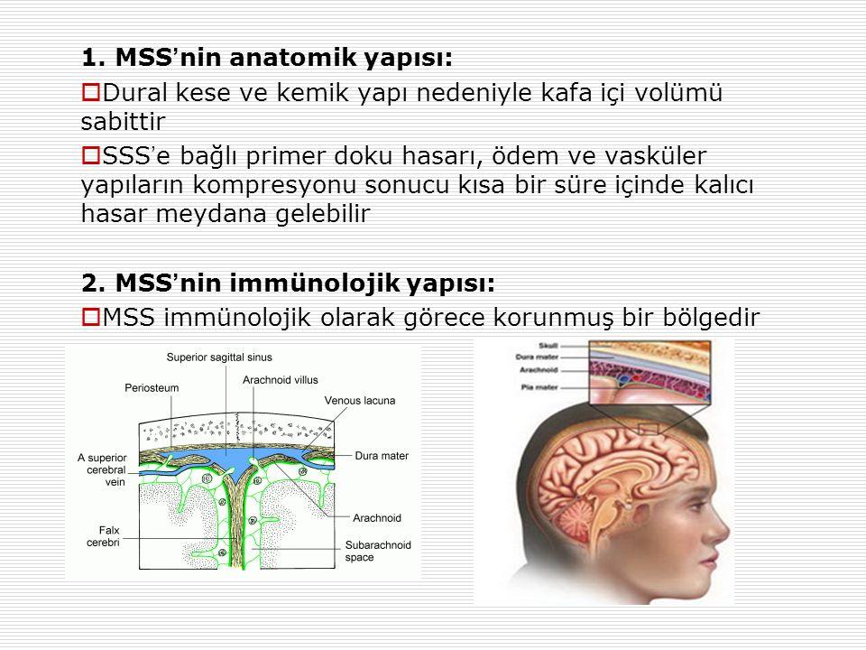 1. MSS'nin anatomik yapısı: