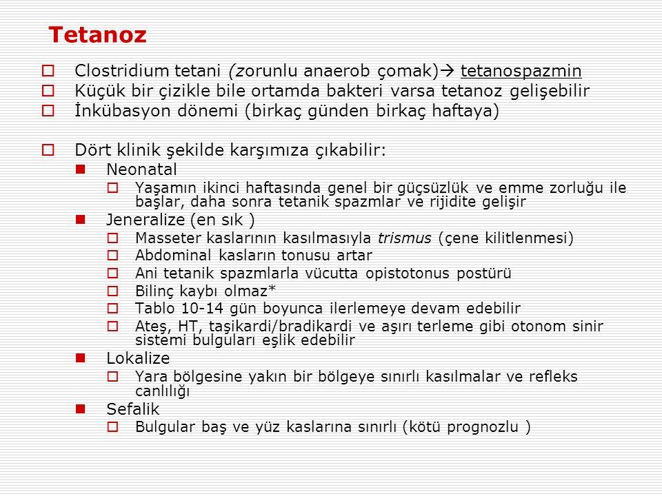 Tetanoz Clostridium tetani (zorunlu anaerob çomak) tetanospazmin