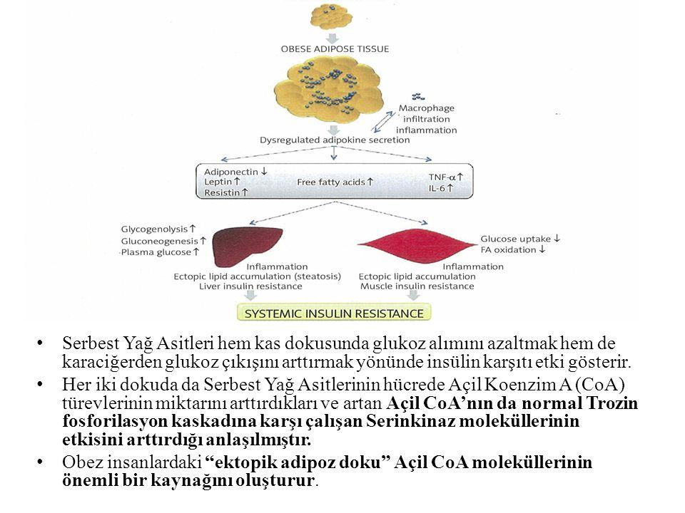 Serbest Yağ Asitleri hem kas dokusunda glukoz alımını azaltmak hem de karaciğerden glukoz çıkışını arttırmak yönünde insülin karşıtı etki gösterir.