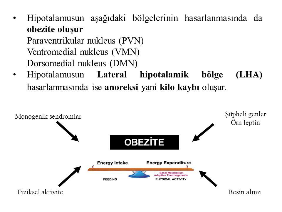 Hipotalamusun aşağıdaki bölgelerinin hasarlanmasında da obezite oluşur