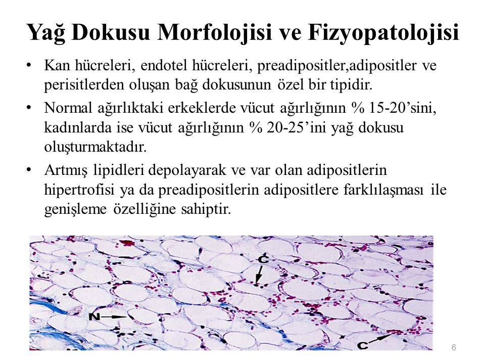 Yağ Dokusu Morfolojisi ve Fizyopatolojisi