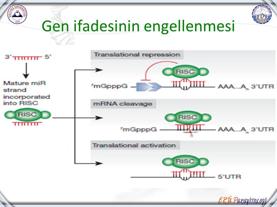 Gen ifadesinin engellenmesi