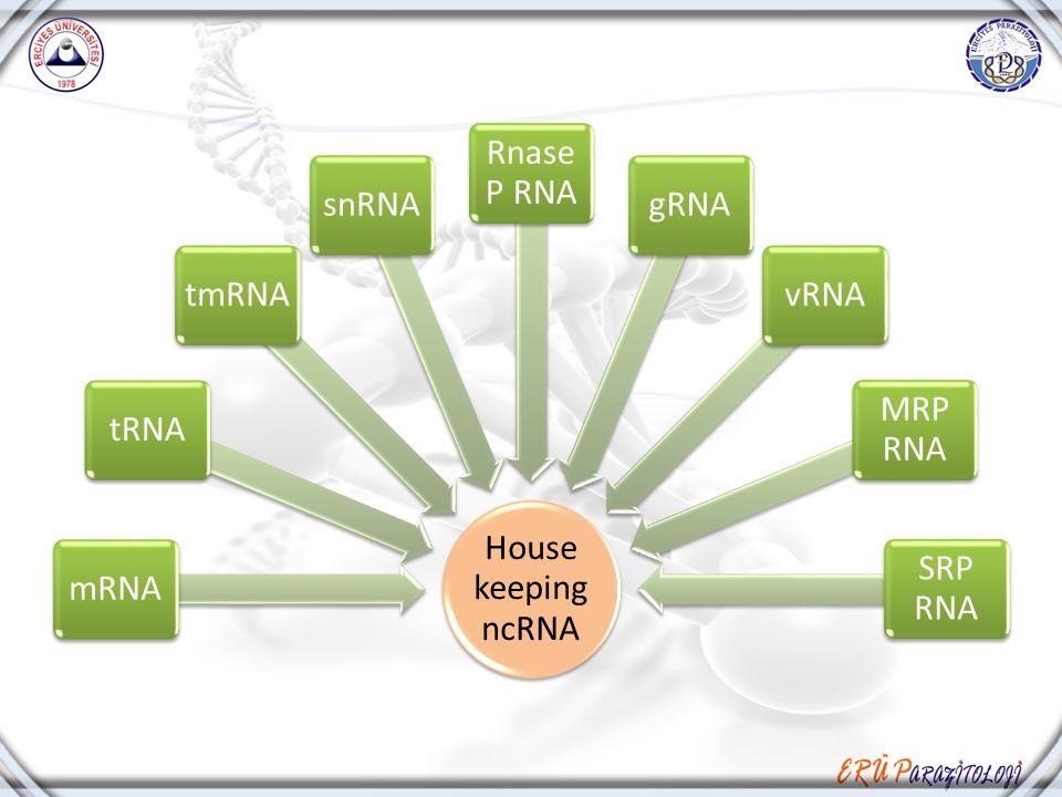House keeping ncRNA mRNA tRNA tmRNA snRNA Rnase P RNA gRNA vRNA MRP RNA SRP RNA