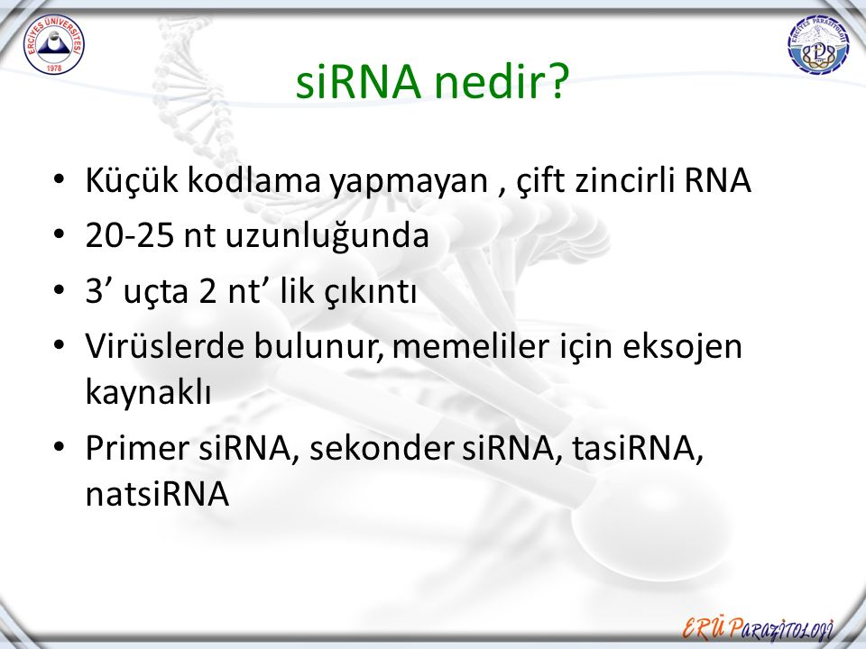 siRNA nedir Küçük kodlama yapmayan , çift zincirli RNA