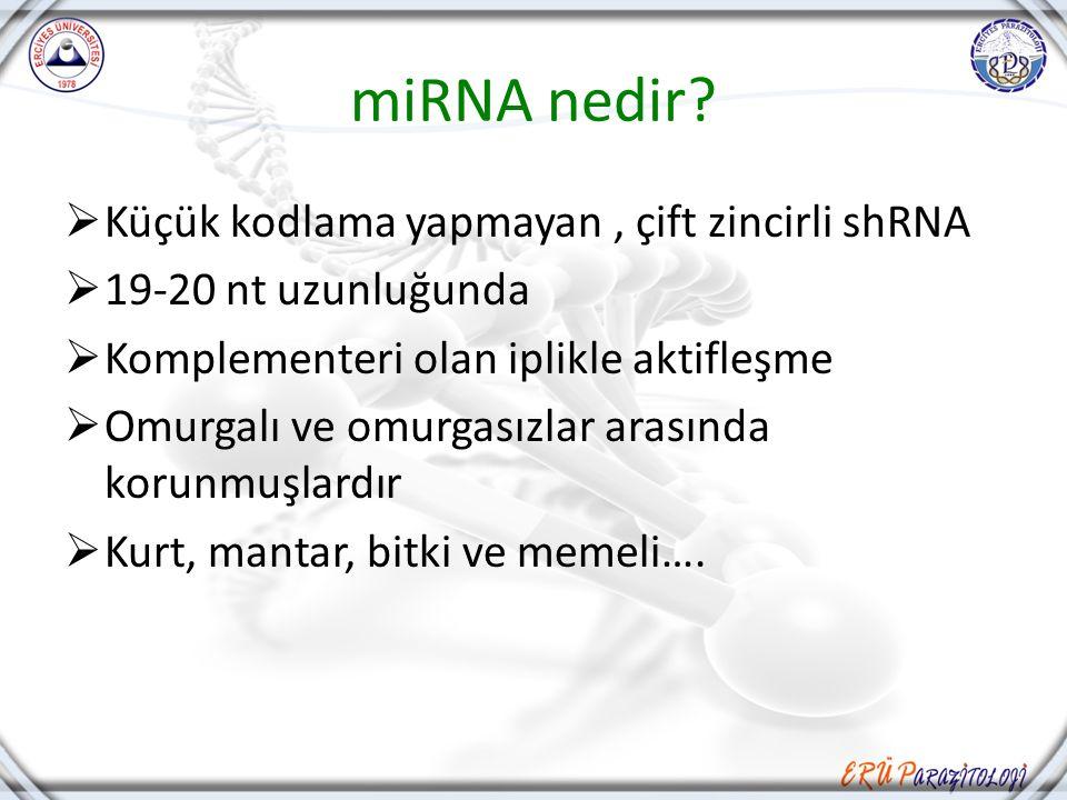 miRNA nedir Küçük kodlama yapmayan , çift zincirli shRNA