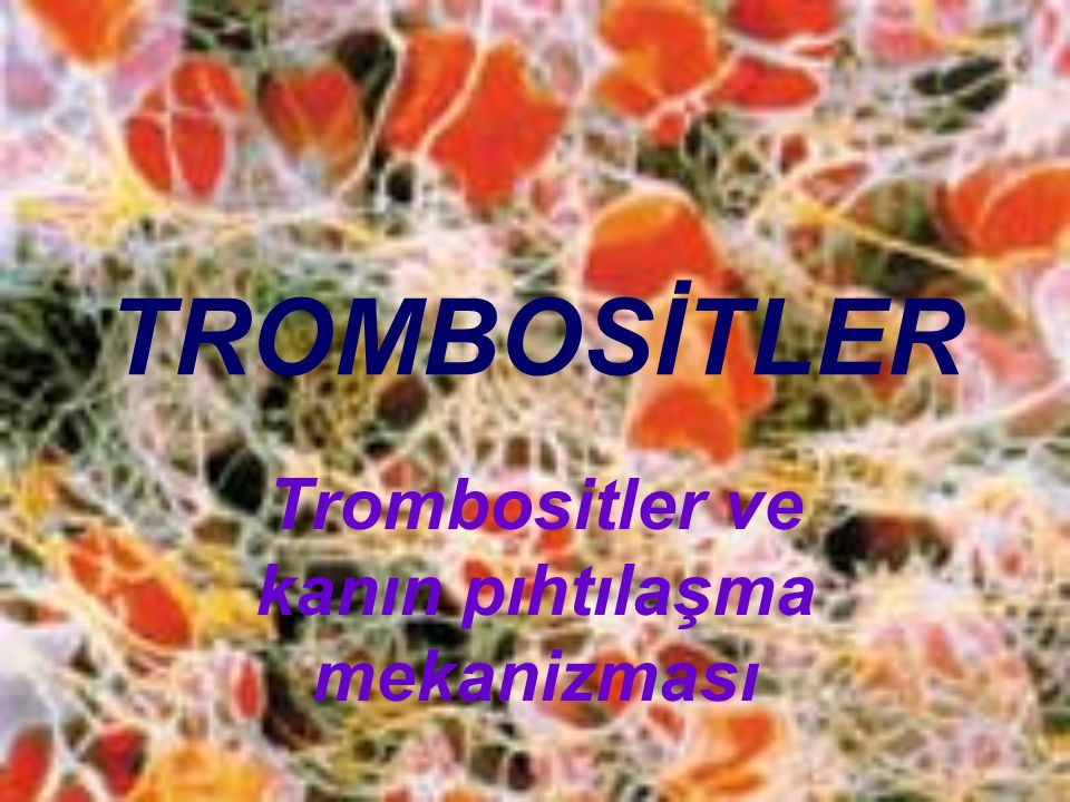 Trombositler ve kanın pıhtılaşma mekanizması