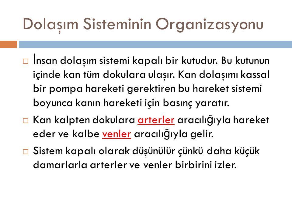 Dolaşım Sisteminin Organizasyonu