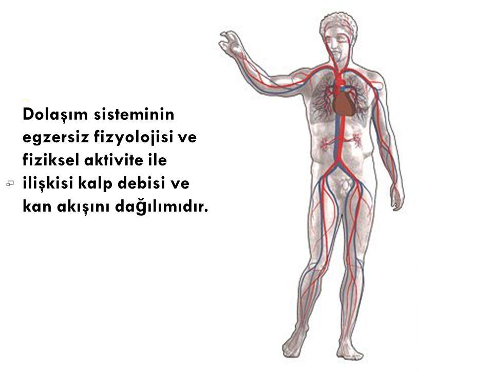 Dolaşım sisteminin egzersiz fizyolojisi ve fiziksel aktivite ile ilişkisi kalp debisi ve kan akışını dağılımıdır.