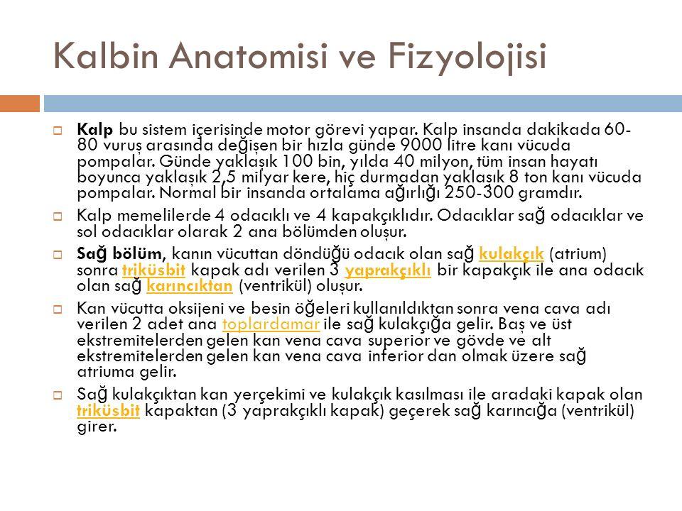 Kalbin Anatomisi ve Fizyolojisi