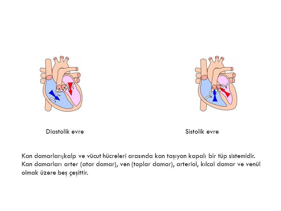 Diastolik evre Sistolik evre.