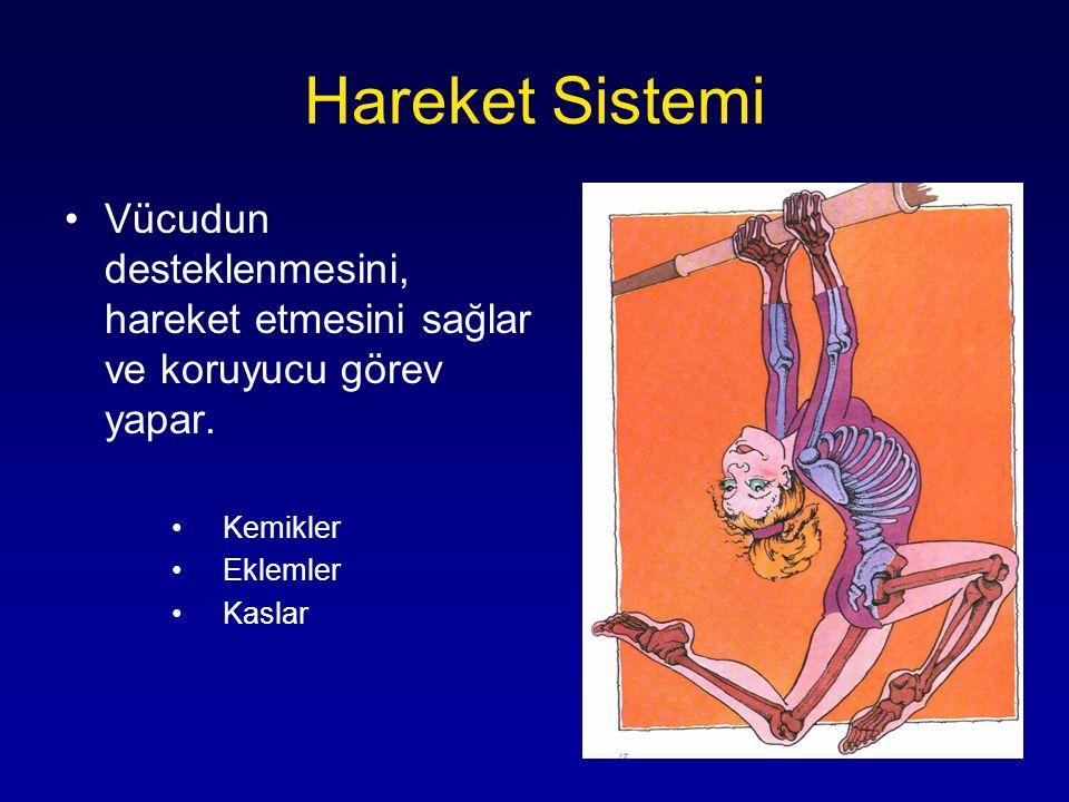 Hareket Sistemi Vücudun desteklenmesini, hareket etmesini sağlar ve koruyucu görev yapar. Kemikler.