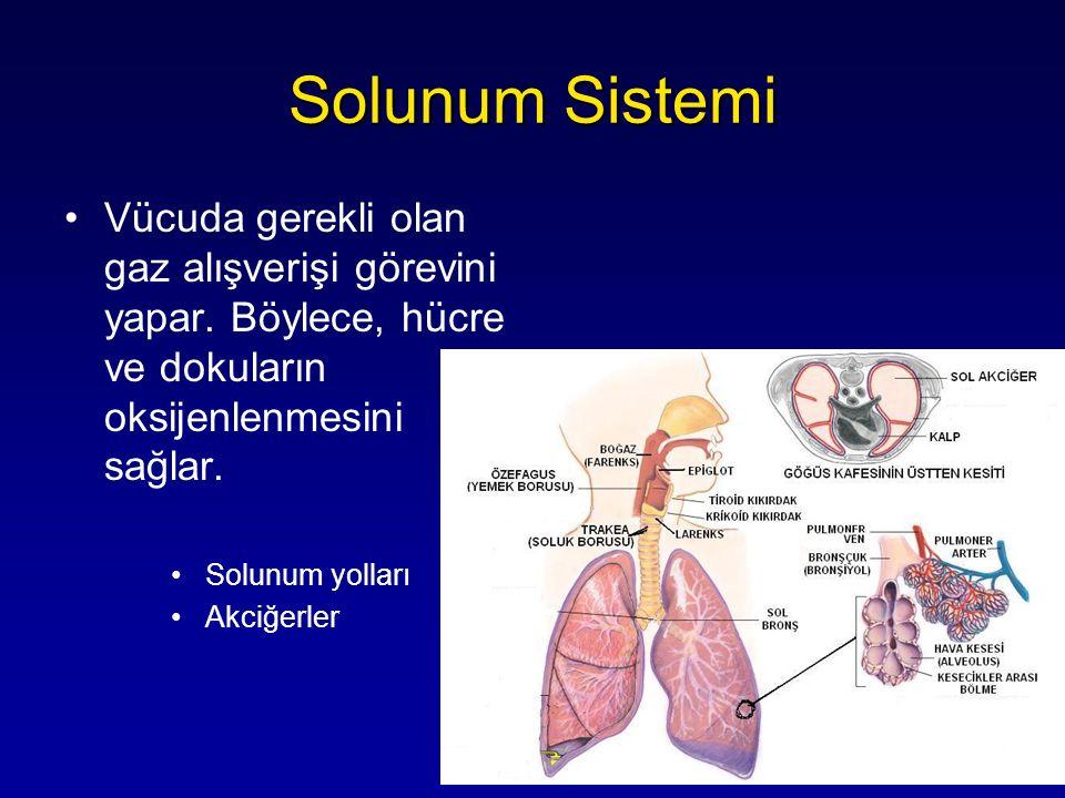 Solunum Sistemi Vücuda gerekli olan gaz alışverişi görevini yapar. Böylece, hücre ve dokuların oksijenlenmesini sağlar.
