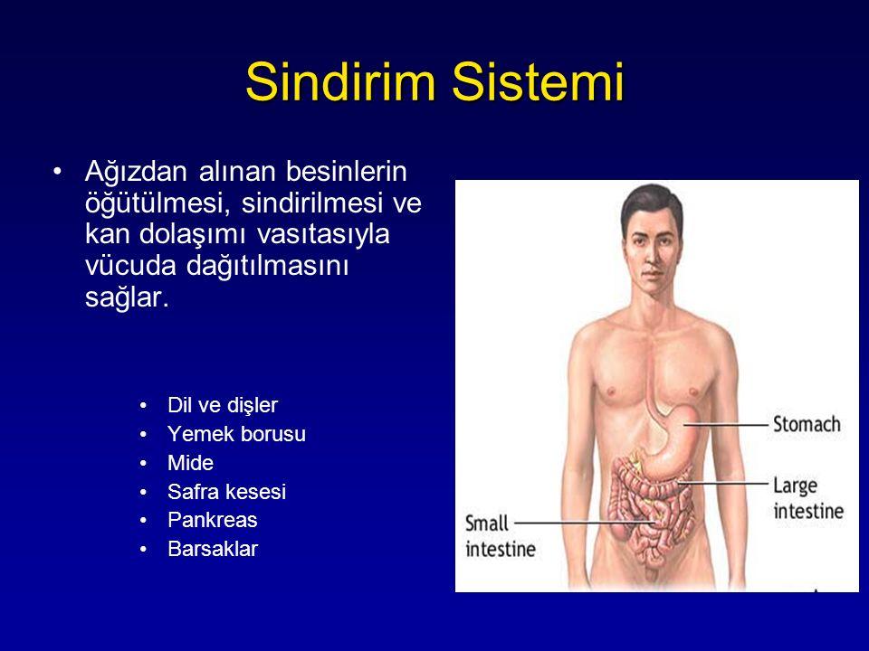 Sindirim Sistemi Ağızdan alınan besinlerin öğütülmesi, sindirilmesi ve kan dolaşımı vasıtasıyla vücuda dağıtılmasını sağlar.