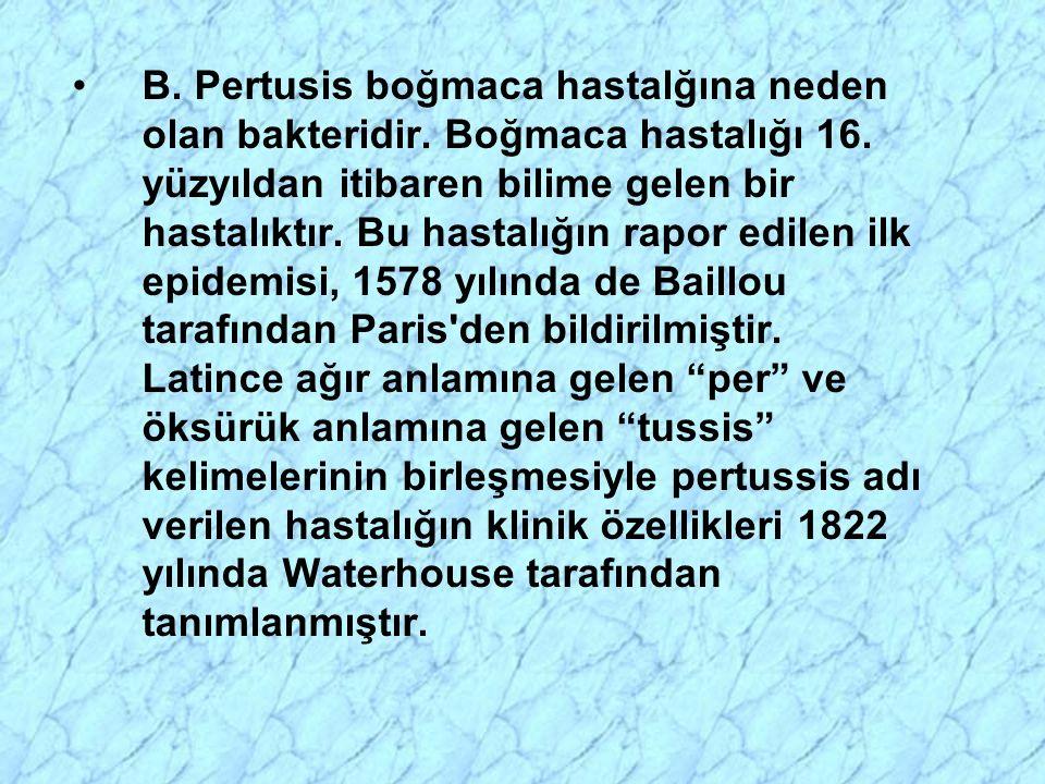 B. Pertusis boğmaca hastalğına neden olan bakteridir