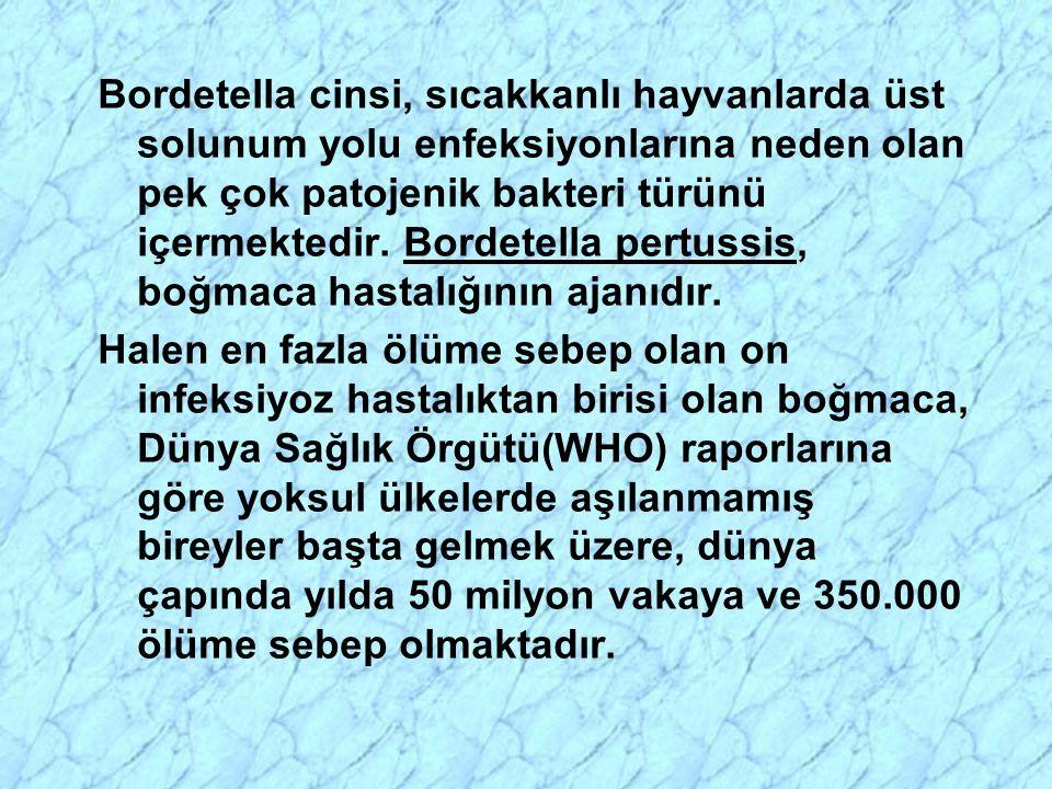 Bordetella cinsi, sıcakkanlı hayvanlarda üst solunum yolu enfeksiyonlarına neden olan pek çok patojenik bakteri türünü içermektedir. Bordetella pertussis, boğmaca hastalığının ajanıdır.