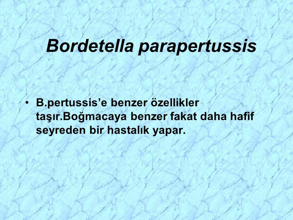 Bordetella parapertussis