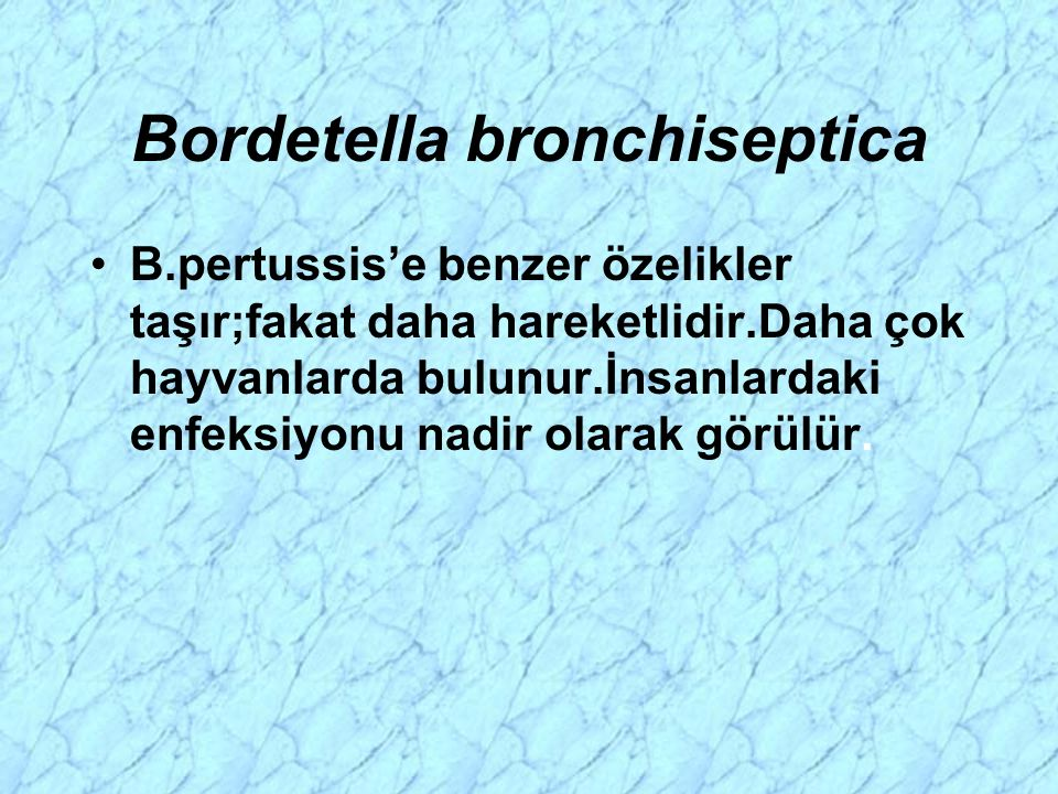 Bordetella bronchiseptica