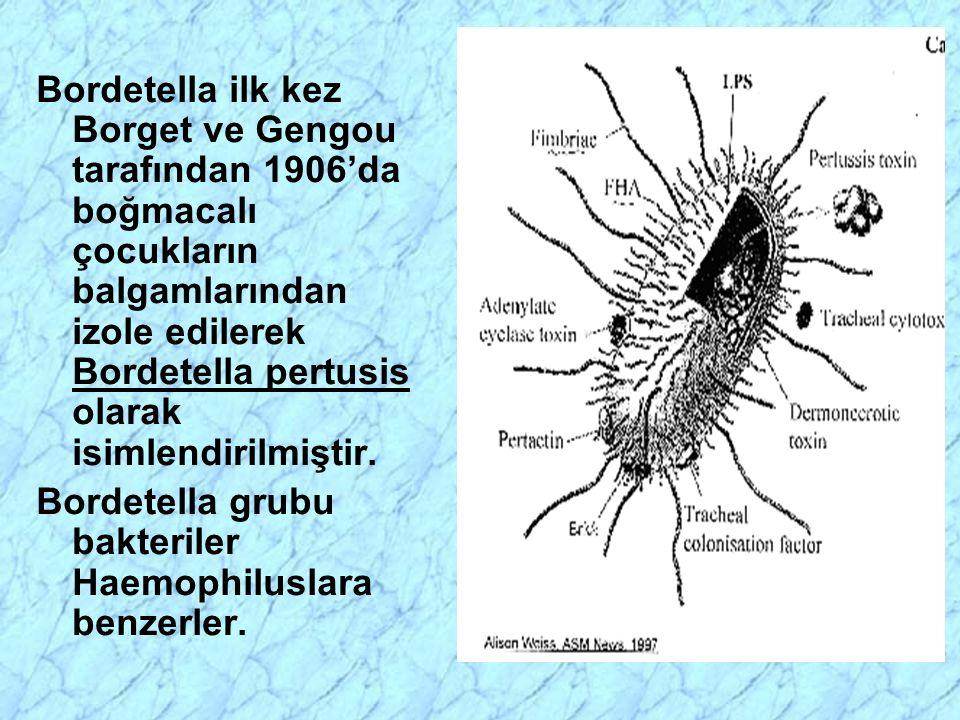 Bordetella ilk kez Borget ve Gengou tarafından 1906'da boğmacalı çocukların balgamlarından izole edilerek Bordetella pertusis olarak isimlendirilmiştir.