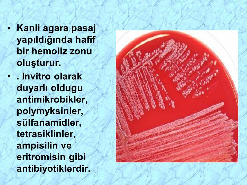 Kanli agara pasaj yapıldığında hafif bir hemoliz zonu oluşturur.
