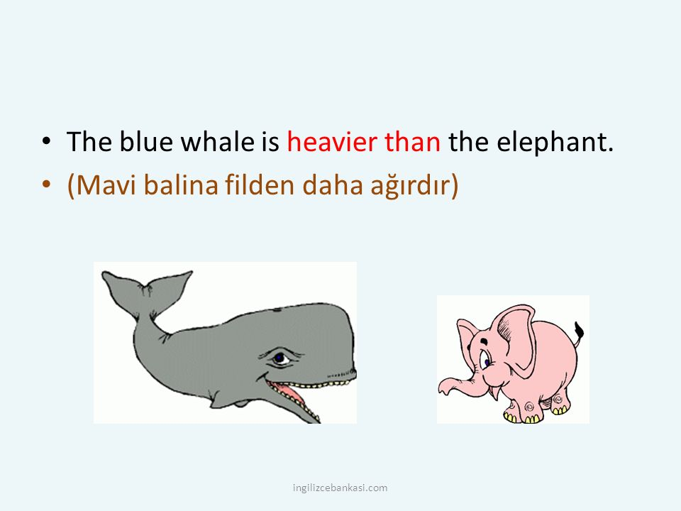The blue whale is heavier than the elephant.