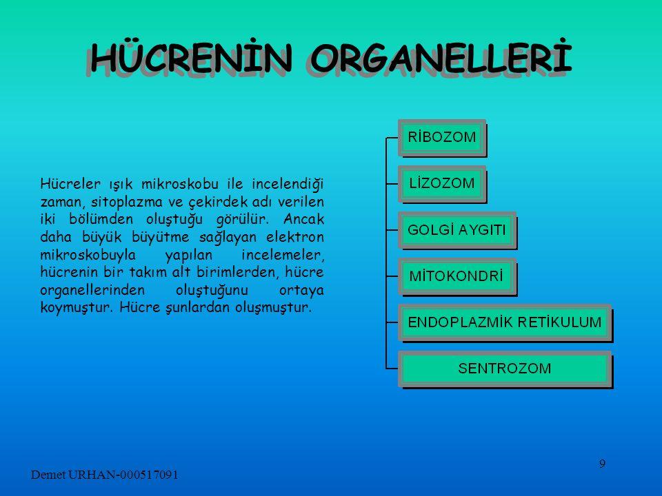 HÜCRENİN ORGANELLERİ