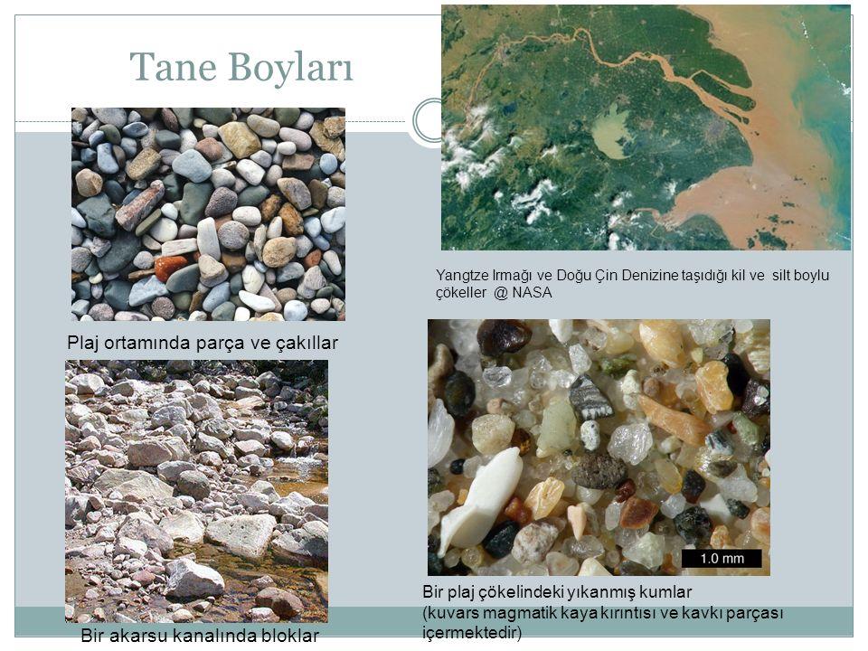 Tane Boyları Plaj ortamında parça ve çakıllar