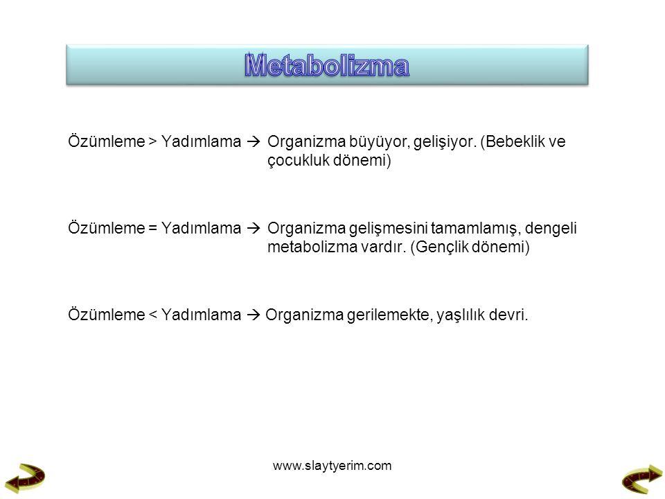 Metabolizma