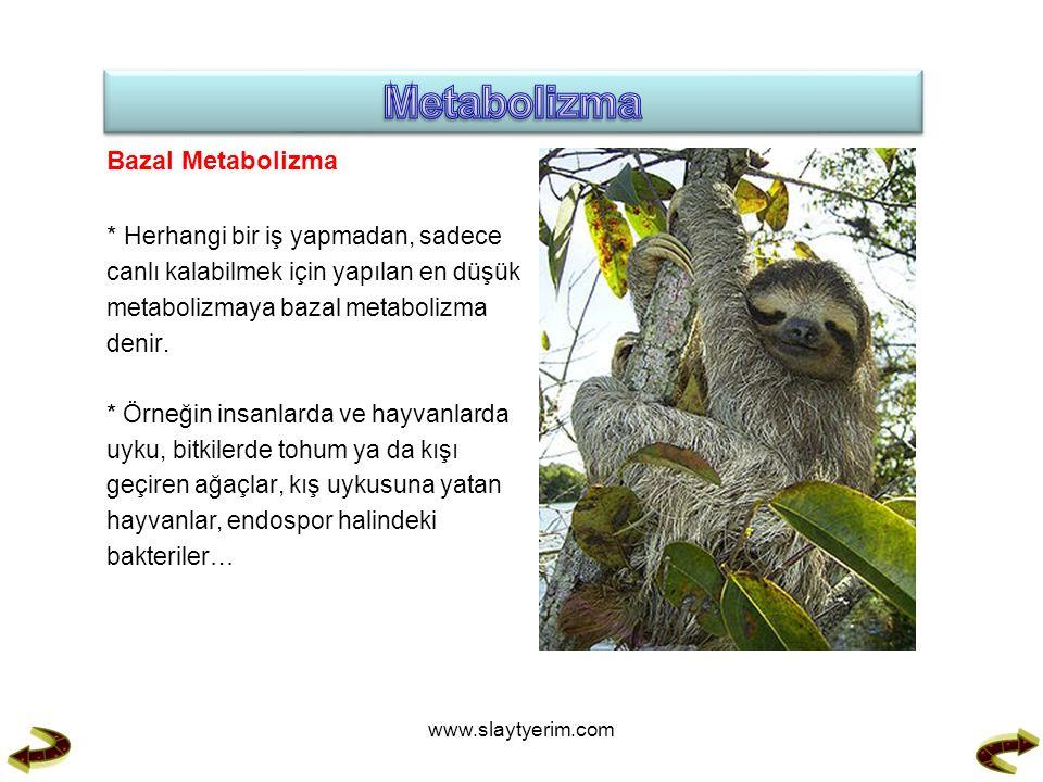 Metabolizma Bazal Metabolizma * Herhangi bir iş yapmadan, sadece