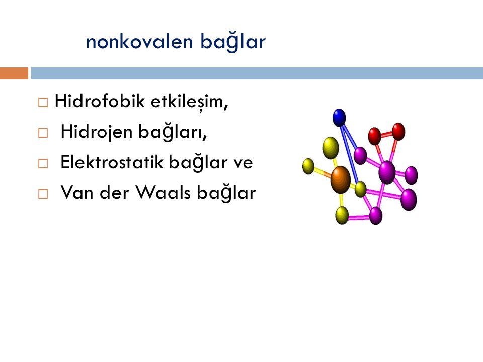 nonkovalen bağlar Hidrofobik etkileşim, Hidrojen bağları,