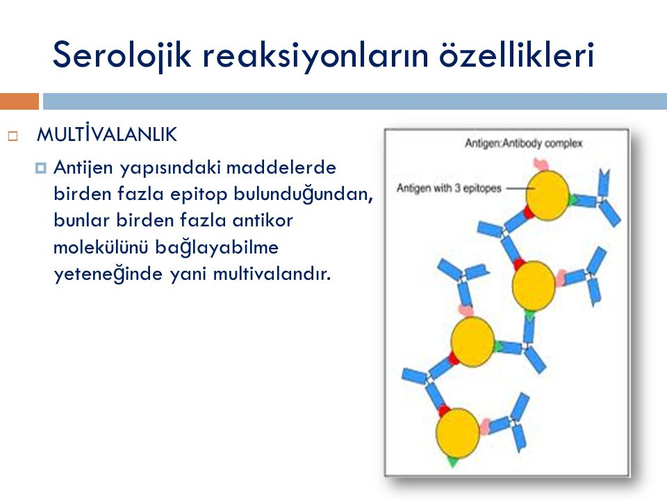 Serolojik reaksiyonların özellikleri